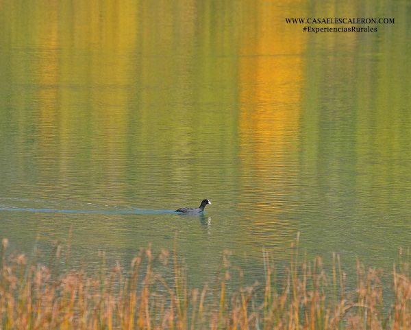 aves acuáticas de la laguna de uña