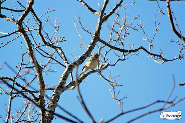Canto primaveral de un pájaro