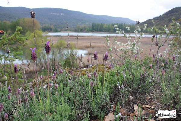 Primavera en la Laguna de Uña