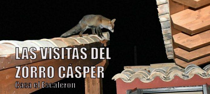 El Zorro Cásper, la mascota de Casa el Escalerón