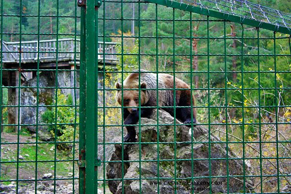En el hosquillo podrás ver espcies animales como el oso o el lobo