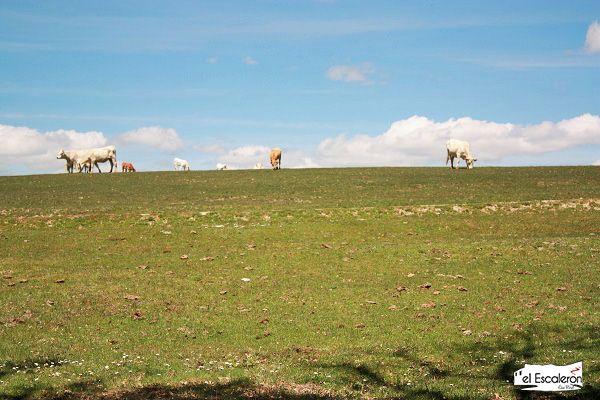 Vacas pastando en un valle primaveral
