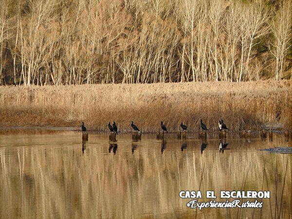 cormoranes secándose al sol en la laguna de uña
