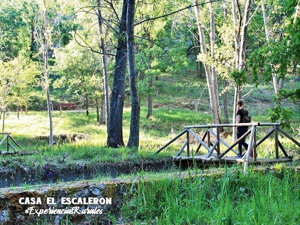 Pequeños puentes de madera por el entorno de la escuela regional de pesca