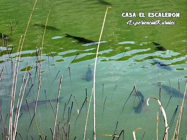 peces en la laguna de uña