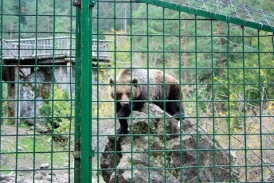 oso el hosquillo